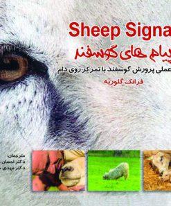 پیام های گوسفند